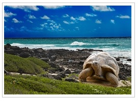 Giant tortoise on Seychelles holiday