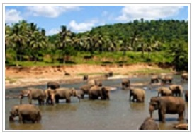 Sri Lanka Indian Ocean holidays