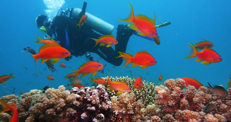 Diving in the Best Resort House Reefs