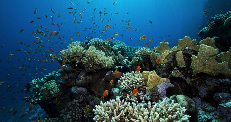 Coral in the Maldives