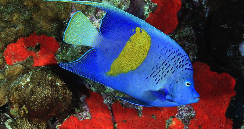 Adaaran Resorts diving and snorkeling