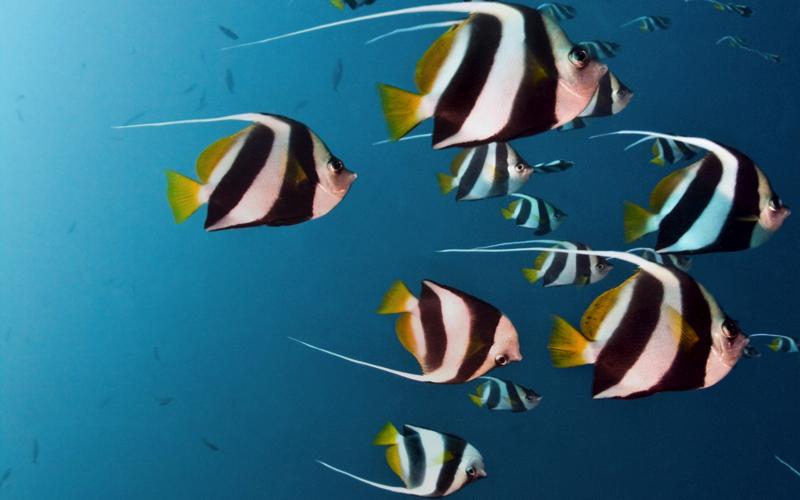 diving at Intercontinental Maamunagau