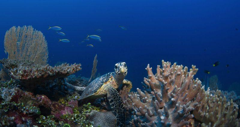 Amazing diving, Maldives