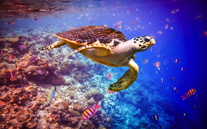 Cocco Hospitality - turtle