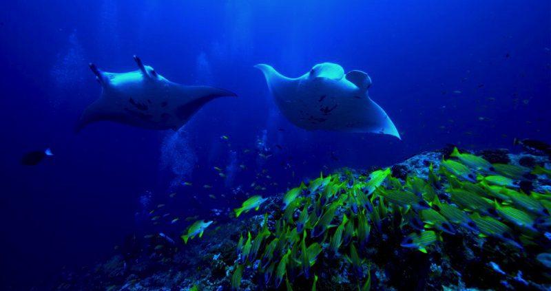 Rays at OBLU resort Maldives