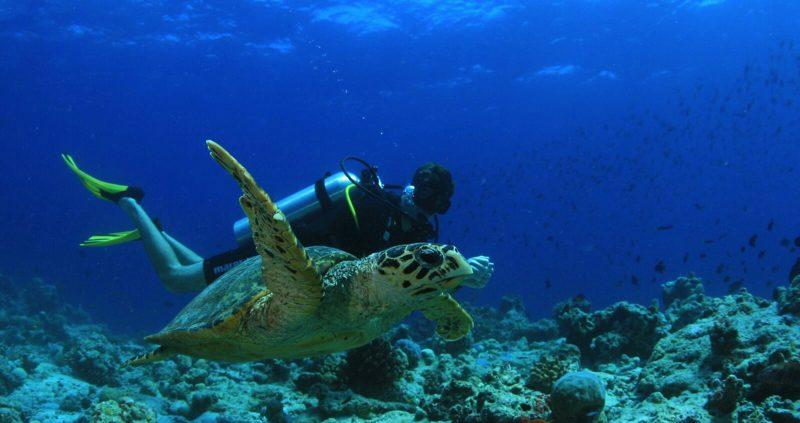 Diving at Amilla Fushi Maldives with turtle