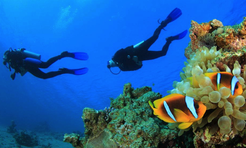 Vakkaru Maldives diving