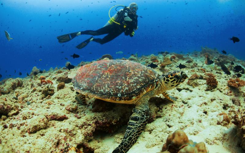 Diving at Velaa Island