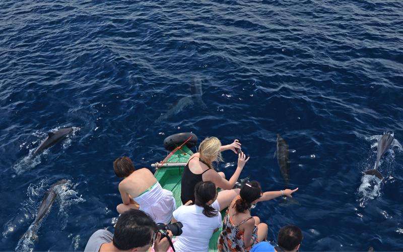 Canareef Resort Maldives dolphin cruise