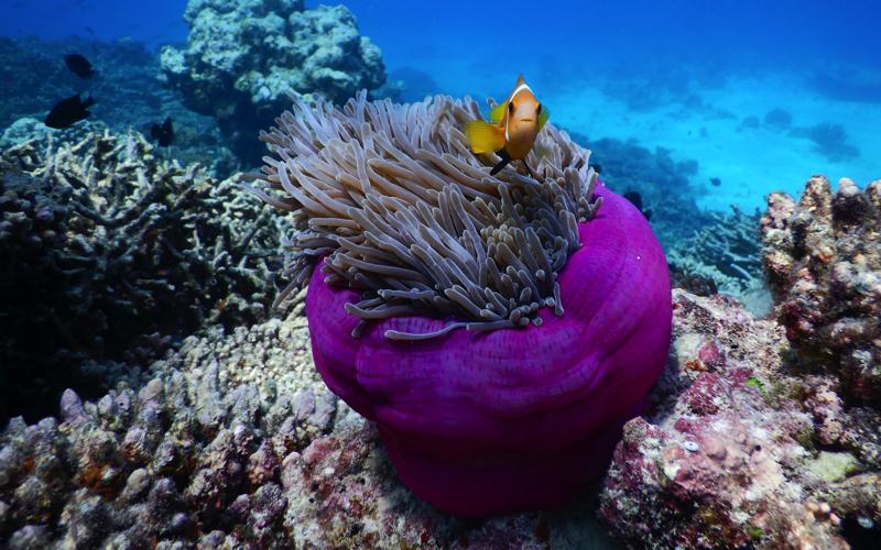 Diving at Reethi Faru Island Resort