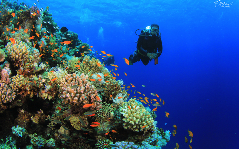 Rihiveli Diving