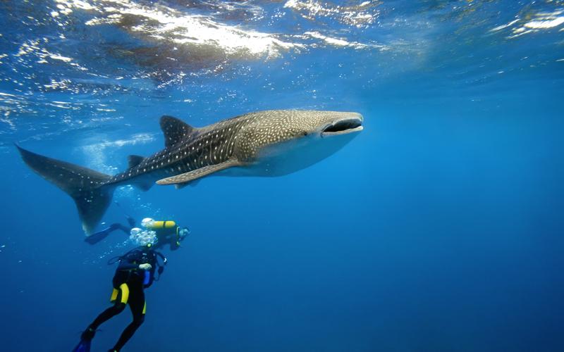 BAA Atoll diving