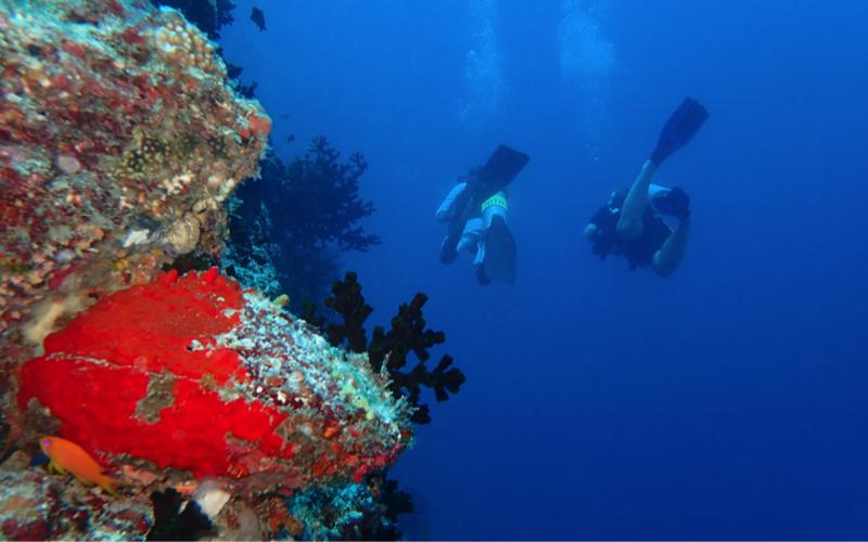 diving at The Nautilus Resort